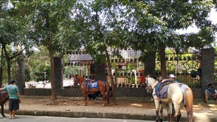 Sepi Pengunjung, Penjaja Wisata Kuda di Taman Cilaki Bandung Sedih, Harus Nombok untuk Beli Pakan