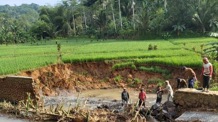 Saluran Irigasi Rusak Parah, Puluhan Hektare Lahan Pertanian di Sukabumi Terancam Gagal Panen