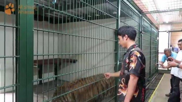 Viral, Harimau Benggala di Rumah Sepupu Raffi Ahmad, Diprotes Penyayang Binatang