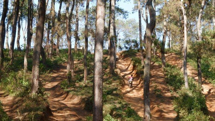 Tanjakan Langit, Surga Penggila Motor Trail di Bandung Selatan, Pacu Adrenalin di Tengah Hutan Pinus