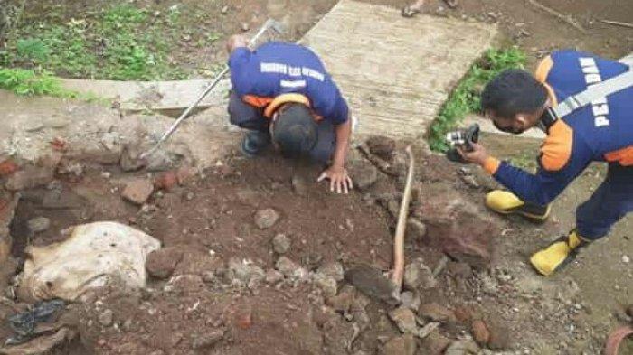 Warga Tanjungsari Heboh, Temukan 14 Ekor Anak Ular Kobra di Dalam Gorong-gorong