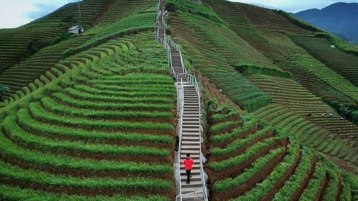 Libur Panjang Telah Tiba, Ini 6 Rekomendasi Tempat Wisata di Majalengka yang Wajib Anda Dikunjungi - terasering-panyaweuyan__.jpg