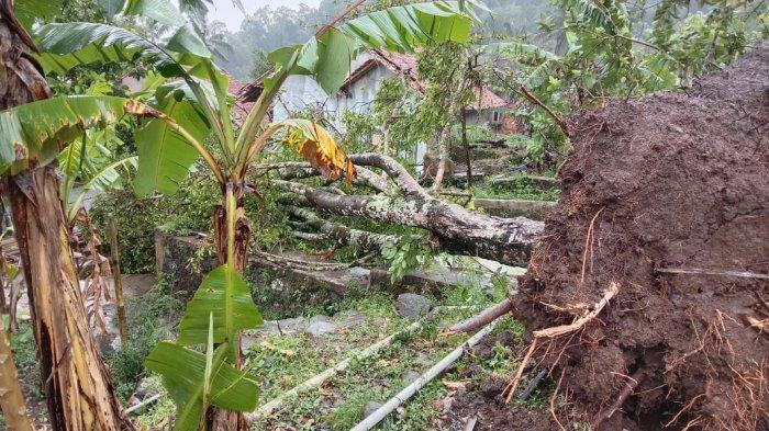 Puluhan Rumah di Padamulya Cianjur Terdampak Angin Kencang, Dua Rumah Tertimpa Pohon Tumbang