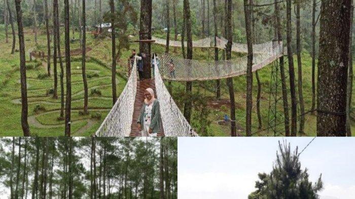 Tiga Tempat Piknik di Bandung untuk Mengisi Liburan Akhir Tahun, Hutan Pinus sampai di Atas Tebing