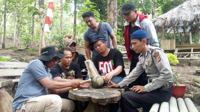Fosil Gajah Purba Ditemukan di Objek Wisata Alam Ciwado Indramayu, Berat Tulangnya Sekitar 20 Kg