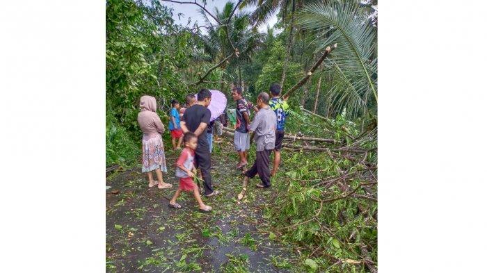 Hujan Deras Disertai Angin Kencang, Pohon Tumbang dan Longsor di Sejumlah Titik di Ciamis