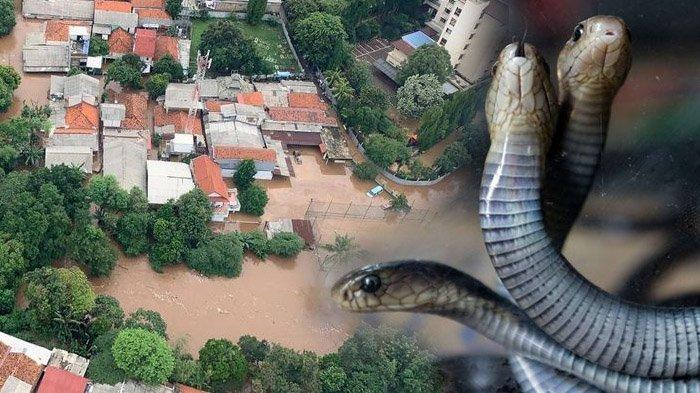 Ular Bisa Muncul di Tengah Banjir, Begini Cara Mengatasinya Saat Kebanjiran,Apalagi Jika Masuk Rumah