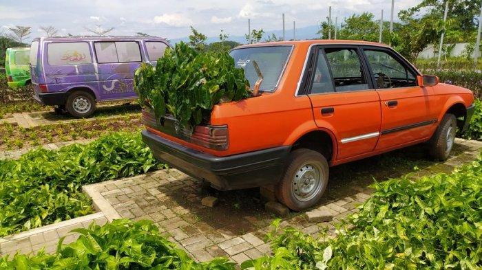 Unik Empat Mobil di Taman Ini Dijadikan Pot Bunga, UG Technopark di Mande Kabupaten Cianjur