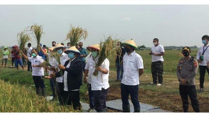 Wamen BUMN Tinjau Panen Proyek Farming 1.000 Hektare, Polres Subang Lakukan Pengamanan