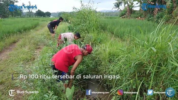 warga mencari uang yang terbawa aliran air di saluran irigasi