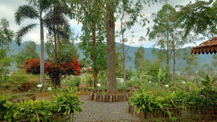 Wisata Baru Garden Herbal, Mengenal Berbagai Tumbuhan Herbal di Mulberry Hill by The Lodge
