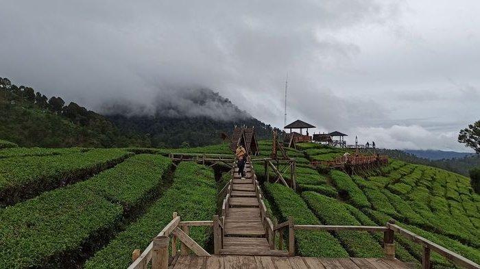 Wisata Wayang Windu Panenjoan, Segarkan Mata dengan Hamparan Kebun Teh Bak Permadani