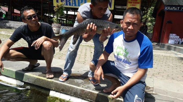 Melihat Lebih Dekat Ikan Dewa di Cibulan Kuningan, Dipercaya Penjelmaan Prajurit Prabu Siliwangi