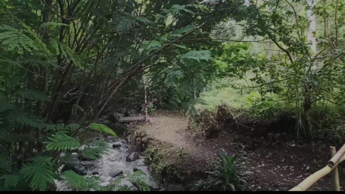 Yuk Trekking Seru ke Hutan Pinus The Lodge Maribaya Lembang, Sejuk dan Segar 2