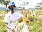 2-bank-bjb-dukung-kesejahteraan-petani-jagung-lewat-kur-petani-milenial.jpg