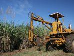 aktivitas-petani-tebu-di-hgu-jatitujuh-kabupaten-majalengka-rabu-6102021.jpg