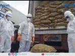 berantan-kementrian-pertanian-musnahkan-108-ton-jahe-impor.jpg