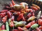 cabai-jenis-setan-dijual-di-pasar-sindangkasih-kecamatan-cigasong-kabupaten-majalengka.jpg
