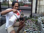 deni-santosa-kaktus-sukabumi.jpg