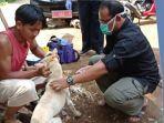 dinas-peternakan-kabupaten-sukabumi-saat-lakukan-vaksinasi-rabies.jpg