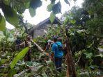 dua-rumah-rusak-di-ciamis-tertimpa-pohon-tumbang-akibat-hujan-deras-dan-angin-kencang.jpg