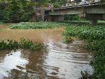 eceng-gondok-di-sungai-cimanuk-1.jpg