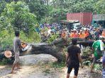 evakuasi-pohon-tumbang-palabuhanratu-sukabumi.jpg