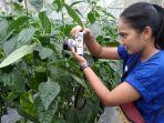 foto-tanaman-paprika-di-green-house-kampung-tabrik.jpg