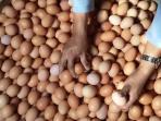 haga-telur-ayam-di-pasar-simpang-dago-kembali-naik_20150805_170548.jpg