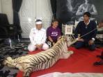 harimau-putih-di-purwakarta_20151111_161231.jpg