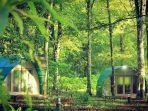 hejo-forest.jpg