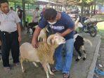 hewan-kambing-dan-sapi-dijajakan-di-pasar-ternak-regional-kadipaten-untuk-dijual.jpg