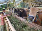 hewan-kurban-sapi-yang-dijual-di-kabupaten-cianjur-2021.jpg