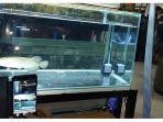 ikan-arwana-dibandrol-rp-60-juta-di-btc-bandung.jpg