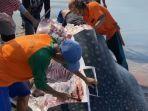 ikan-besar-diduga-hiu-tutul-yang-terdampar-itu-kini-sudah-mati-dan-dipotong-potong-warga.jpg
