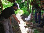 kambing-mati-misterius-kembali-ditemukan-di-kecamatan-cibingbin-kabupaten-kuningan.jpg