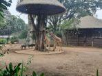 kebun-binatang-bandung-882021.jpg