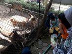 kebun-binatang_20171224_172143.jpg