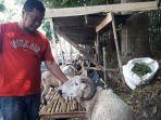 kemal-pedagang-domba-musiman-di-kota-bandung.jpg