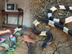 kisah-kisah-tragis-akibat-ular-weling.jpg