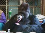 koko-gorilla_20180621_204346.jpg