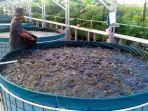 kolam-ikan-bioflok-di-jawa-barat-sumber-diskanla-jabar.jpg