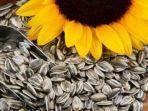 kuaci-dari-biji-bunga-matahari.jpg