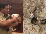 kucing-prabowo-subianto.jpg