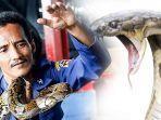 muhammad-rizal-50-ular-king-cobra.jpg