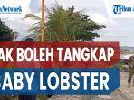 nelayan-pangandaran-tak-boleh-lagi-tangkap-baby-lobster-ini-alasan-dari-bupati-jeje-2.jpg