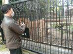 pantau-singa-cikembulan.jpg