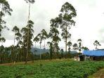 para-keluarga-yang-memilih-tinggal-di-gubuk-tanpa-listrik-di-dekat-hutan-terlarang-demi-kehidupan.jpg