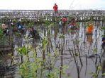 penanaman-mangrove-di-pantai-wilayah-desa-jadimulya-kecamatan-gunungjati_20180318_190211.jpg