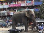 penduduk-kota-siliguri-dihebohkan-oleh-seekor-gajah-yang-kesasar_20160211_193656.jpg
